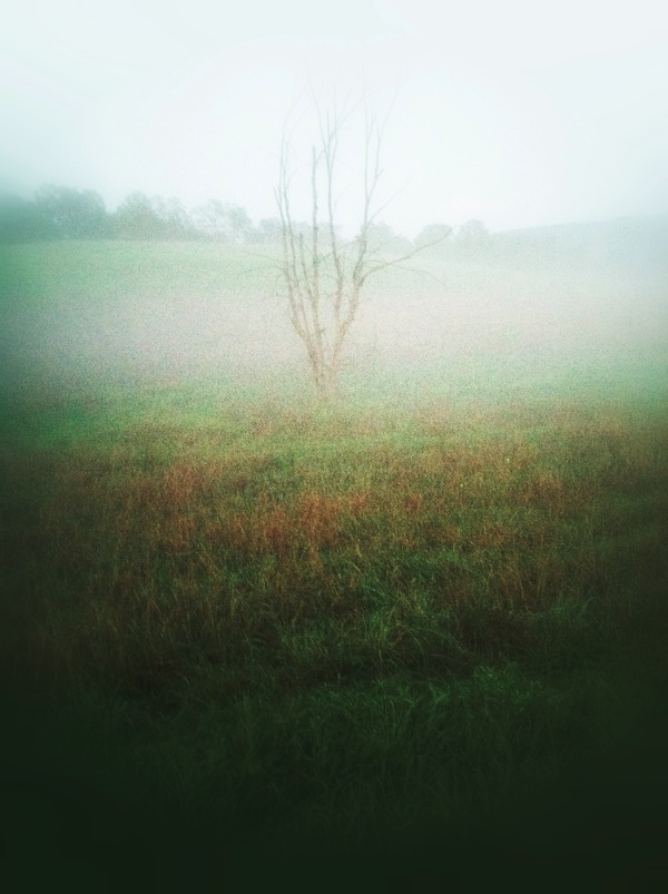 September 12 / Tree in the mist